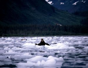 584 Suprise Glacier Sea Otters.jpg